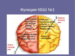 Функции КБШ №1 Левое полушарие Правое полушарие Слуховые и двигательные цент