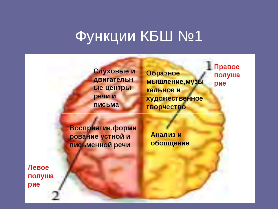 Функции КБШ №1 Левое полушарие Правое полушарие Слуховые и двигательные цент...