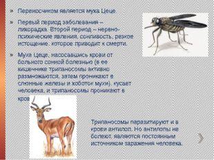 Переносчиком является муха Цеце. Первый период заболевания – лихорадка. Второ