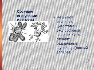 Сосущие инфузории (Suctoria) Не имеют ресничек, цитостома и околоротовой воро