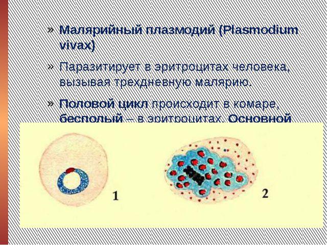 Малярийный плазмодий (Plasmodium vivax) Паразитирует в эритроцитах человека,...