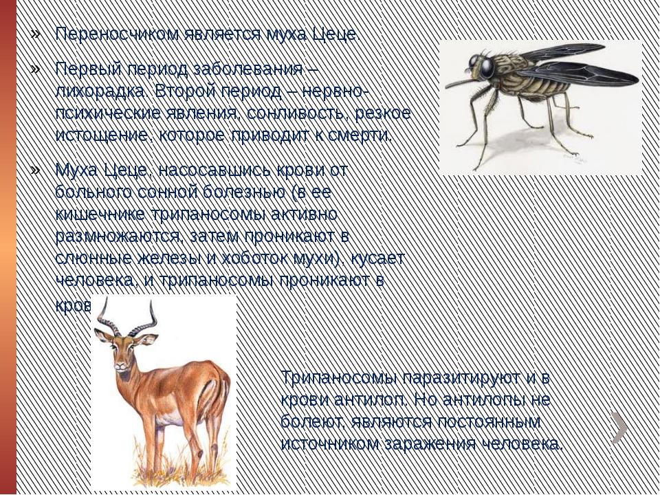 Переносчиком является муха Цеце. Первый период заболевания – лихорадка. Второ...