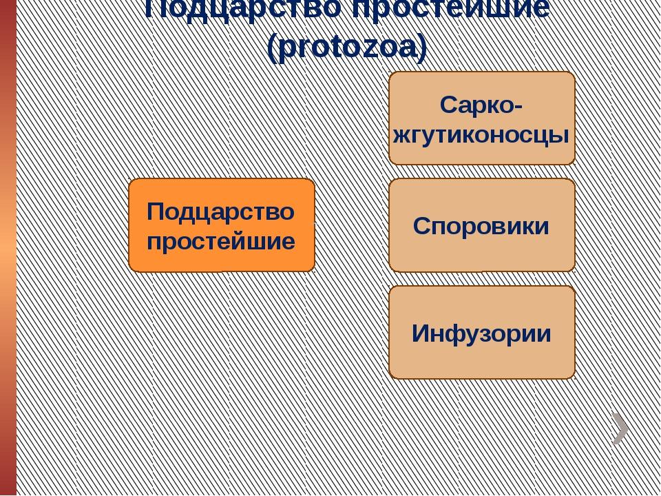 Подцарство простейшие (protozoa)