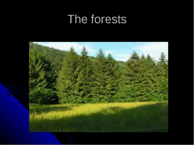 The forests