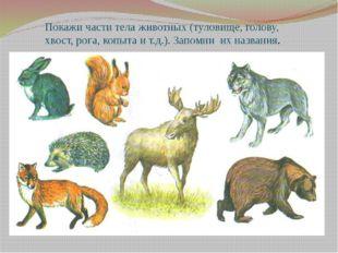 Покажи части тела животных (туловище, голову, хвост, рога, копыта и т.д.). За