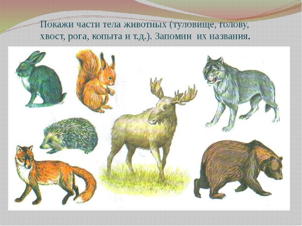 Покажи части тела животных (туловище, голову, хвост, рога, копыта и т.д.). За...