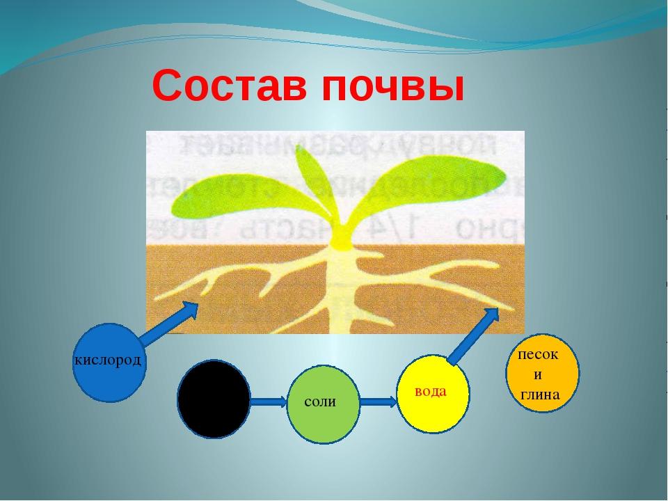 Состав почвы кислород перегной соли песок и глина вода