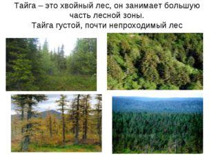 Тайга – это хвойный лес, он занимает большую часть лесной зоны. Тайга густой,