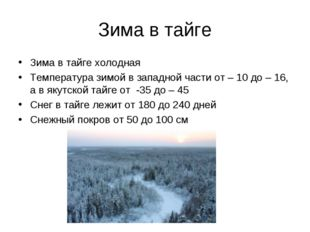 Зима в тайге Зима в тайге холодная Температура зимой в западной части от – 10