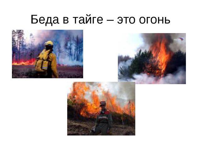 Беда в тайге – это огонь