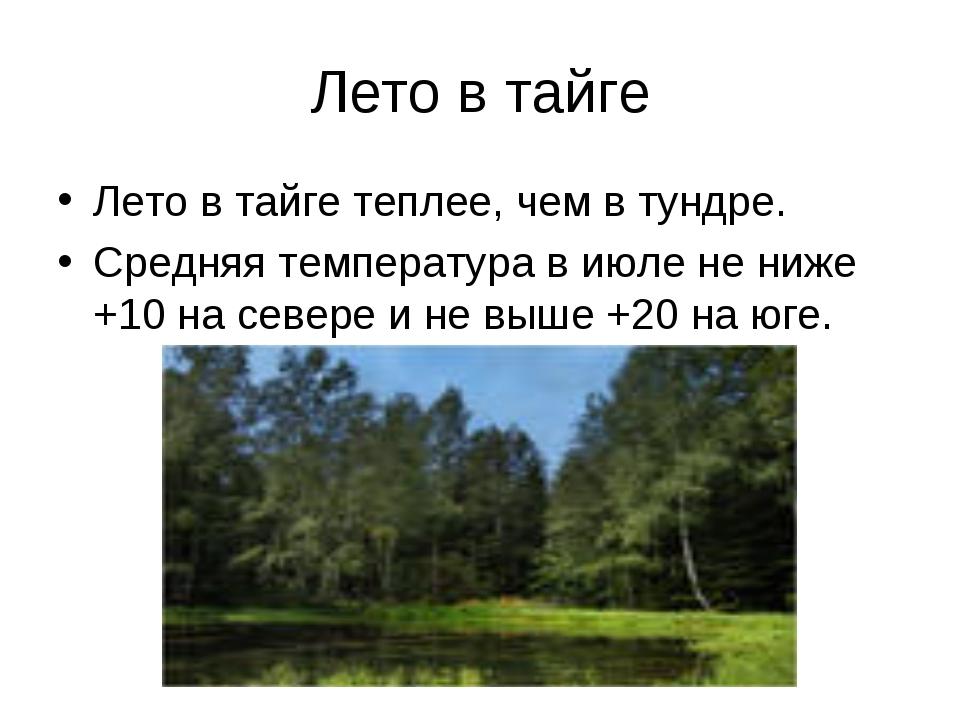 Лето в тайге Лето в тайге теплее, чем в тундре. Средняя температура в июле не...