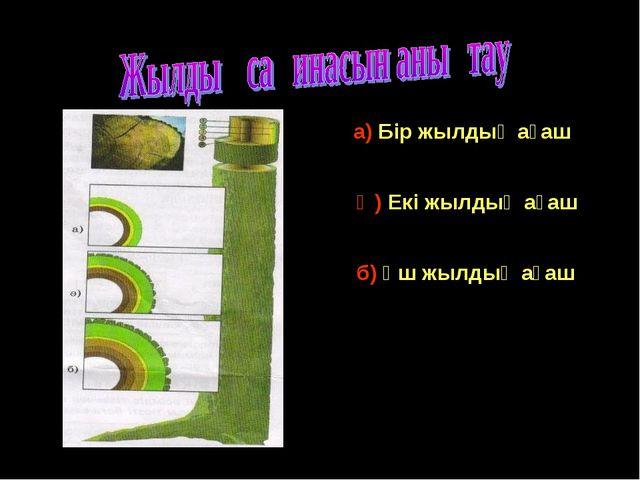 а) Бір жылдық ағаш Ә) Екі жылдық ағаш б) Үш жылдық ағаш