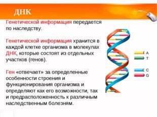 ДНК Генетической информация передается по наследству. Генетической информация