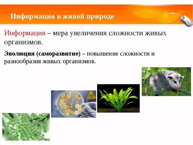 Информация в живой природе Информация – мера увеличения сложности живых орган...
