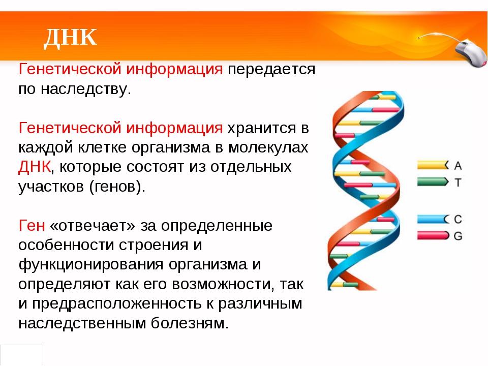 ДНК Генетической информация передается по наследству. Генетической информация...