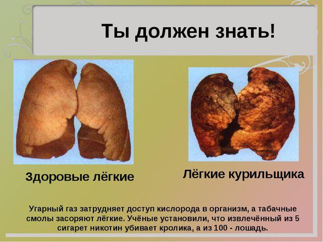Ты должен знать! Здоровые лёгкие Лёгкие курильщика Угарный газ затрудняет дос...