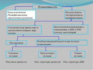 Изменчивость Ненаследственная (Модификационная, определенная,групповая) Насл