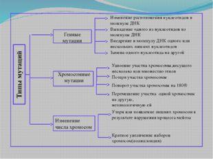 Типы мутаций Генные мутации Хромосомные мутации Изменение числа хромосом Изм