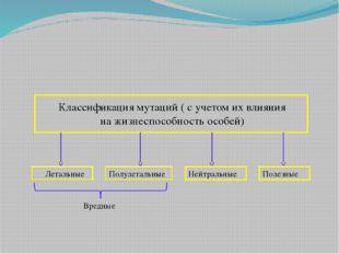 Классификация мутаций ( с учетом их влияния на жизнеспособность особей) Лета