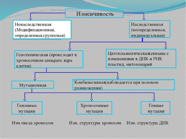 Изменчивость Ненаследственная (Модификационная, определенная,групповая) Насл...