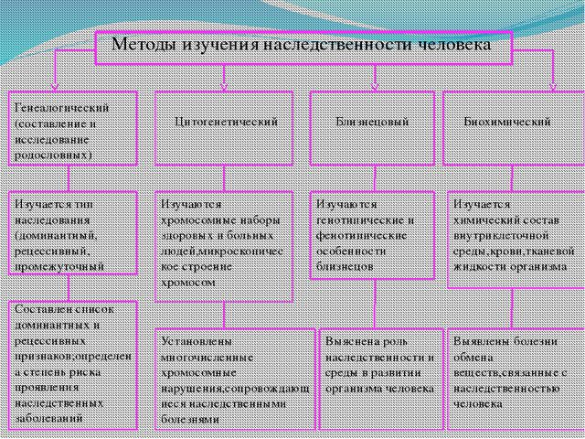 Методы изучения наследственности человека Генеалогический (составление и исс...