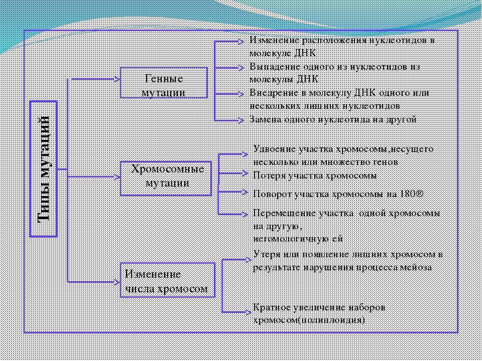 Типы мутаций Генные мутации Хромосомные мутации Изменение числа хромосом Изм...