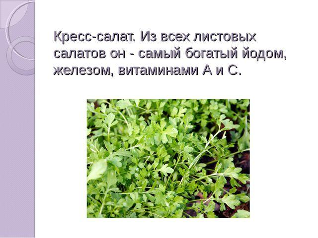 Кресс-салат. Из всех листовых салатов он - самый богатый йодом, железом, вита...