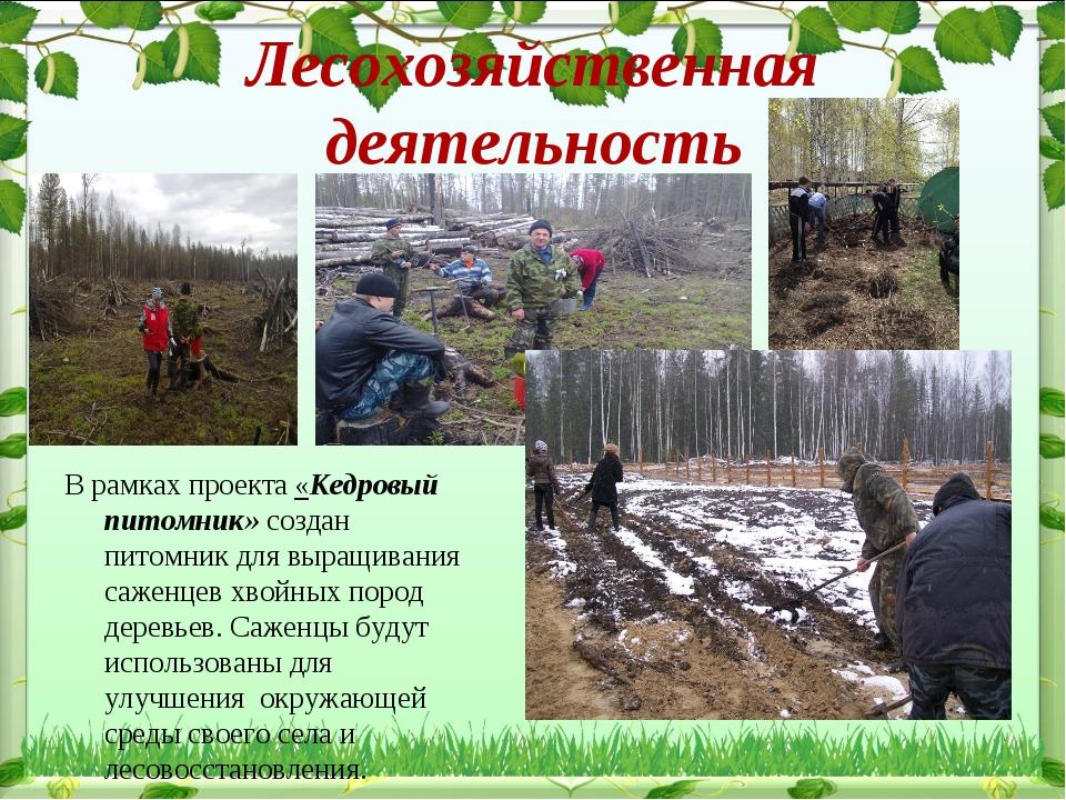Лесохозяйственная деятельность В рамках проекта «Кедровый питомник» создан пи...