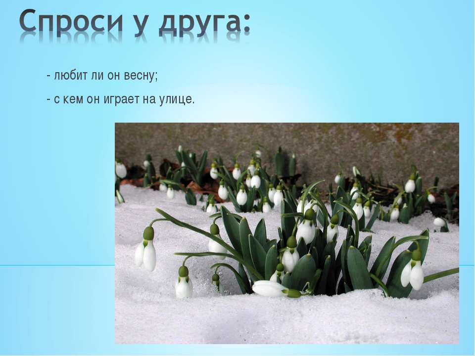 - любит ли он весну; - с кем он играет на улице.