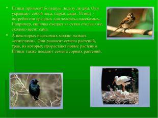 Птицы приносят большую пользу людям. Они украшают собой леса, парки, сады. Пт