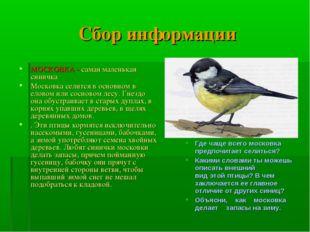 Сбор информации МОСКОВКА - самая маленькая синичка Московка селится в основно