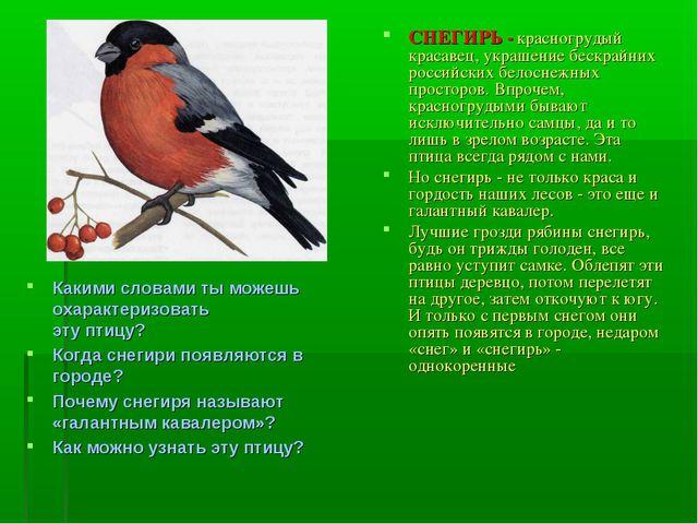 Какими словами ты можешь охарактеризовать эту птицу? Когда снегири появляются...