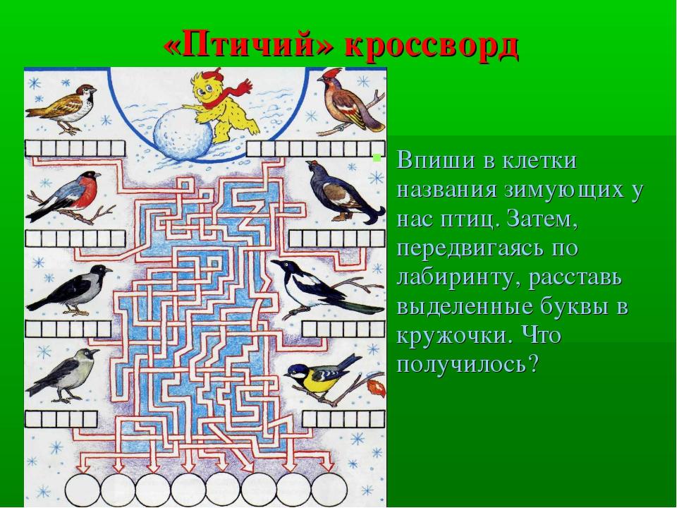 «Птичий» кроссворд Впиши в клетки названия зимующих у нас птиц. Затем, передв...
