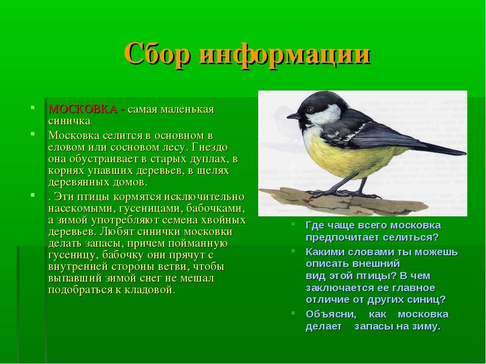 Сбор информации МОСКОВКА - самая маленькая синичка Московка селится в основно...
