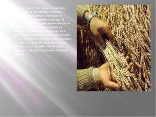 В начале 50-х г.г. в стране сложилась напряженная обстановка с хлебом. Средня