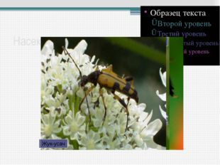 Насекомые-опылители Бабочка-желтушка Пчела-плотник Муха-журчалка Жук-усач Важ