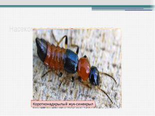 Насекомые, опасные для человека Общественные осы у гнезда Скопление гусениц з
