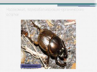 Насекомые, перерабатывающие органические остатки Ногохвостки Личинка жука бро