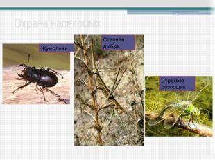 Охрана насекомых Жук-олень Степная дыбка Стрекоза дозорщик Не только насекомы