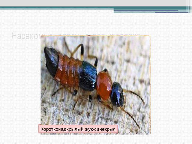 Насекомые, опасные для человека Общественные осы у гнезда Скопление гусениц з...