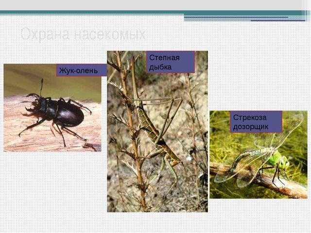 Охрана насекомых Жук-олень Степная дыбка Стрекоза дозорщик Не только насекомы...