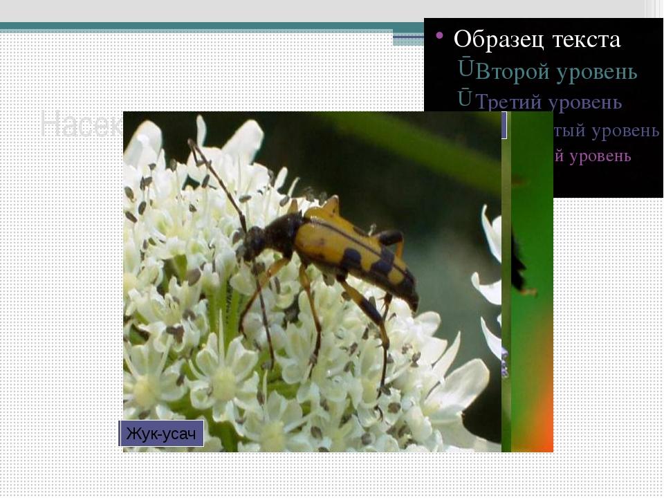 Насекомые-опылители Бабочка-желтушка Пчела-плотник Муха-журчалка Жук-усач Важ...