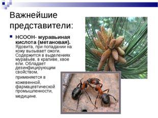 Важнейшие представители: HCOOH- муравьиная кислота (метановая). Ядовита, при