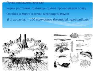 Почва насыщена жизнью Корни растений, грибницы грибов пронизывают почву Особе