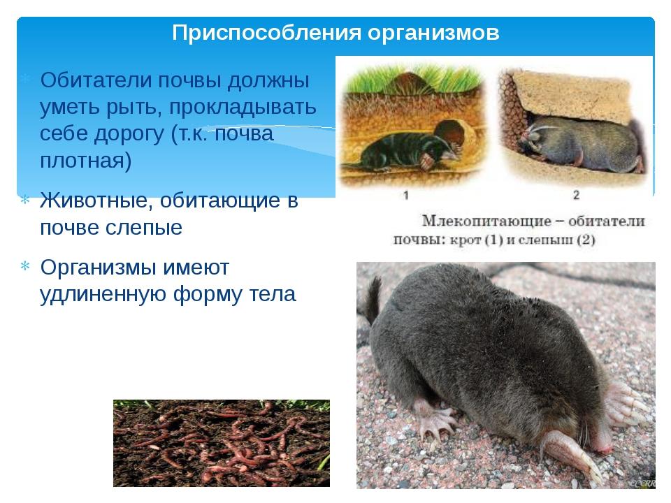 Обитатели почвы должны уметь рыть, прокладывать себе дорогу (т.к. почва плотн...