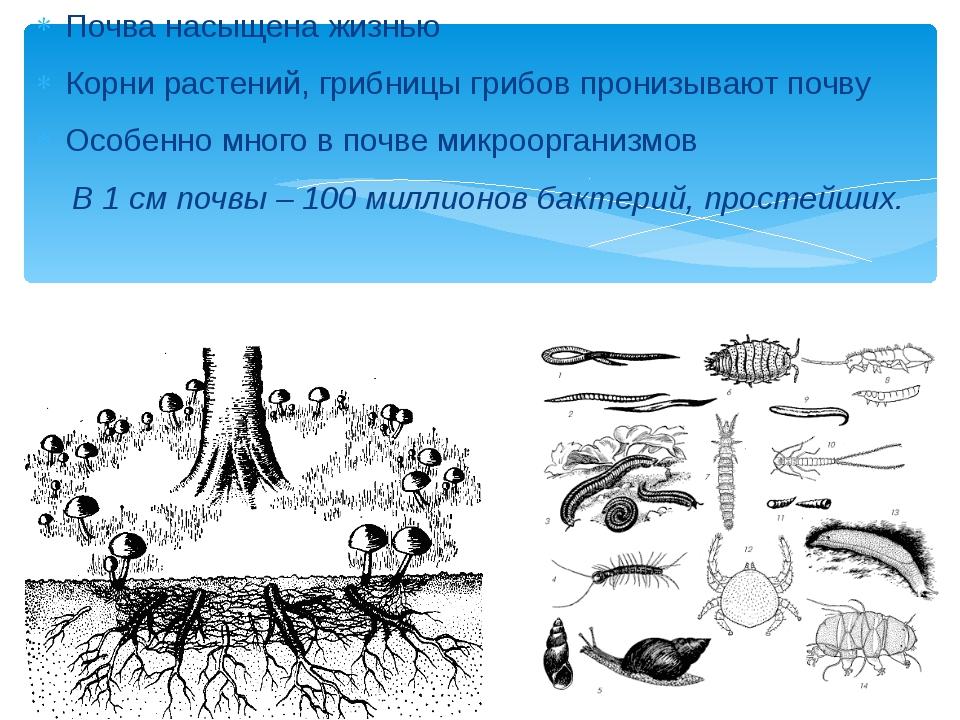 Почва насыщена жизнью Корни растений, грибницы грибов пронизывают почву Особе...