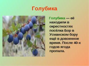 Голубика Голубика — её находили в окрестностях посёлка Бор в Усманском бору е