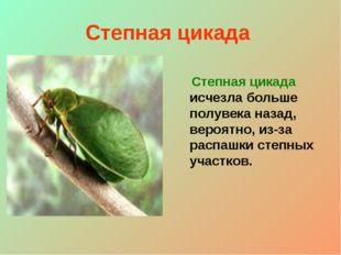 Степная цикада Степная цикада исчезла больше полувека назад, вероятно, из-за