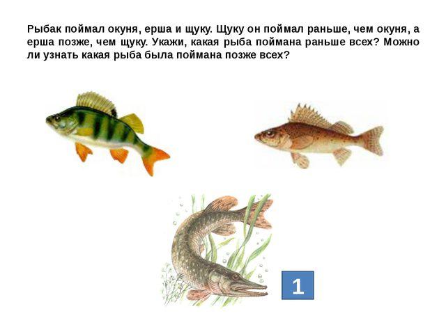 Рыбак поймал окуня, ерша и щуку. Щуку он поймал раньше, чем окуня, а ерша поз...