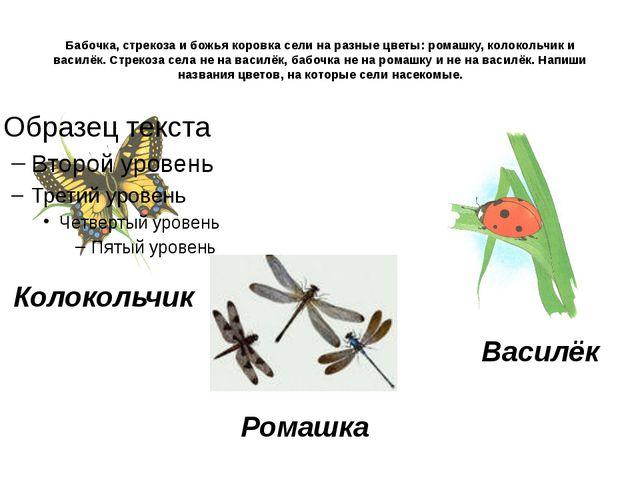 Бабочка, стрекоза и божья коровка сели на разные цветы: ромашку, колокольчик...